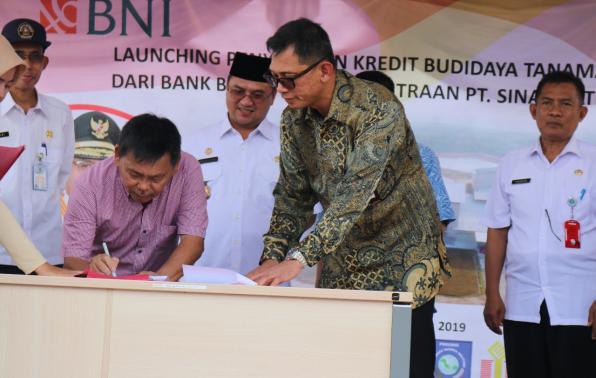 Para Petani Singkong Terima Bantuan Pinjaman Dana KUR BRI ...